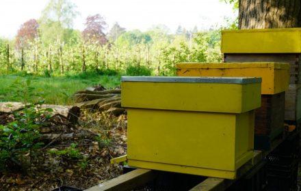 HB_NL Bijenkasten
